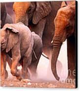 Elephants Stampede Canvas Print