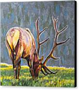 Elk Canvas Print by Aaron Spong