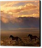 Elusive Wild And Free Mustangs Canvas Print by Jeanne  Bencich-Nations