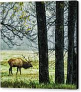 Emerging From The Fog Canvas Print by Priscilla Burgers