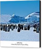 Emperor Penguin Rookery Canvas Print by David Barringhaus