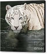 Emperor  Canvas Print by Sydne Archambault