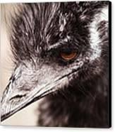 Emu Closeup Canvas Print by Karol Livote