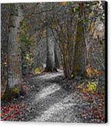 Enchanted Woods Canvas Print by Linsey Williams