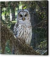 Encounter With An Owl Canvas Print by Heike Ward