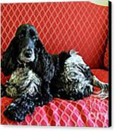 English Cocker Spaniel On Red Sofa Canvas Print by Catherine Sherman