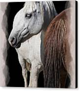 Equine Horse Head And Tail Canvas Print by Daniel Hagerman