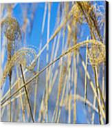 Eulalia Grass Native To East Asia Canvas Print