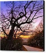 Evening Tree Canvas Print by Debra and Dave Vanderlaan