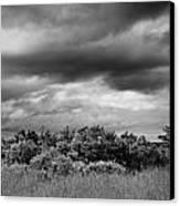 Everglades Storm Bw Canvas Print