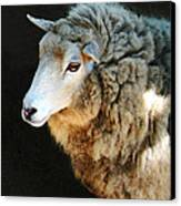 Ewe Are So Beautiful Canvas Print