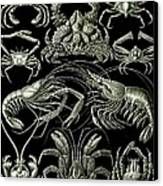 Examples Of Decapoda Kunstformen Der Natur Canvas Print by Ernst Haeckel