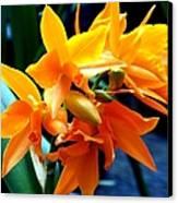 Exotic Orange Canvas Print by Karen Wiles