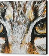 Eye-catching Bobcat Canvas Print by Barbara Keith