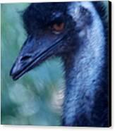 Eye Of The Emu Canvas Print by DerekTXFactor Creative