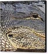 Eye Of The Gator Canvas Print by Adam Jewell