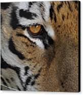 Eye Of The Tiger Canvas Print by Ernie Echols