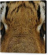 Eyes Of The Tiger Canvas Print by Sandy Keeton