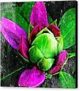 Fairy Bloom  Canvas Print