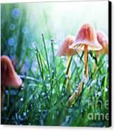 Fairytopia Canvas Print by Sylvia Cook