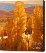 Fall Backlight Canvas Print by Doyle Shaw