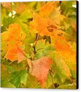 Fall Colors Canvas Print by Donald Torgerson