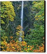 Fall Colors Frame Multnomah Falls Columbia River Gorge Oregon Canvas Print