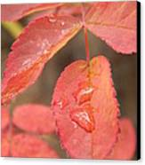 Fall Colors Canvas Print by Jennifer Kimberly