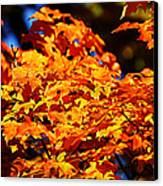 Fall Foliage Colors 16 Canvas Print by Metro DC Photography