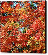 Fall Foliage Colors 22 Canvas Print