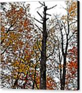Fall Forrest Canvas Print by Stephanie Grooms
