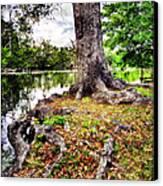 Fall In Audubon Park Canvas Print by Ray Devlin