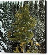 Fall Into Winter Canvas Print