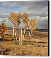 Fall In Yellowstone Canvas Print by Daniel Behm