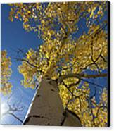 Fall Tree Canvas Print by David Yack