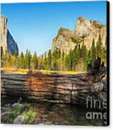 Fallen Tree In Yosemite Canvas Print