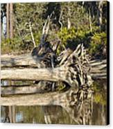 Fallen Trees Reflected In A Beach Tidal Pool Canvas Print