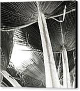 Fan Palm Canvas Print by Lisa Cortez