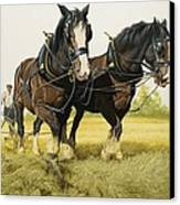 Farm Horses Canvas Print
