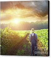 Farmer Walking In Corn Fields At Sunset Canvas Print by Sandra Cunningham