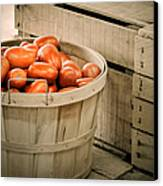 Farmers Market Plum Tomatoes Canvas Print by Julie Palencia
