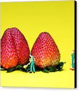 Farmers Working Around Strawberries Canvas Print