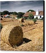 Farmland Canvas Print by Carlos Caetano