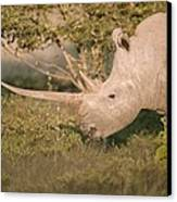 Female White Rhinoceros Grazing Canvas Print by Science Photo Library