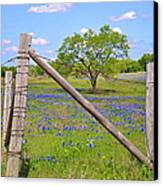Fenced-in Beauty Canvas Print by Lynn Bauer