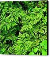 Ferns And Fauna Canvas Print