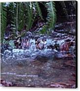 Ferns Dancing Canvas Print by Donald Torgerson