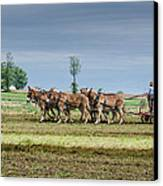Fertilizing Canvas Print