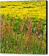 Field In Spring Canvas Print by Beverly Hammond