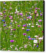 Field Of Flowers Canvas Print by Leyla Ismet
